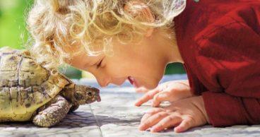 Un niño pequeño con una tortuga de mascota.jpg